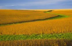 Kleur van de oogst Royalty-vrije Stock Afbeelding