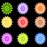 kleuren bloemen Stock Afbeelding