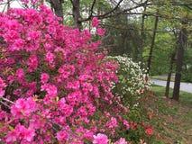 Kleuren in de lente Stock Afbeelding