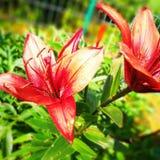 Kleuren in de tuin Artistiek kijk in uitstekende levendige kleuren Royalty-vrije Stock Fotografie