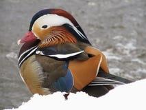 Kleuren in de winter Stock Afbeeldingen