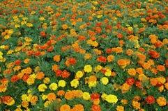 Kleuren en bloemen Royalty-vrije Stock Foto's