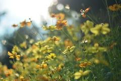 Kleuren Gele bloemen Royalty-vrije Stock Afbeeldingen