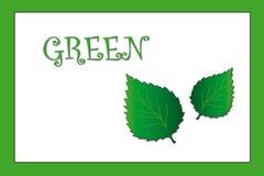 Kleuren: groen Royalty-vrije Stock Afbeelding