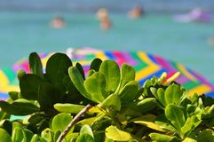 Kleuren in Hawaï Stock Afbeeldingen
