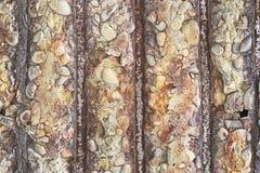 Kleuren heldere textuur van het vernietigde beton met de roestige montage en de stenen in grunge stock foto's