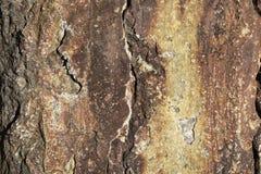 Kleuren heldere textuur van het vernietigde beton met de verschijnende roest en de barsten in grunge stock afbeeldingen