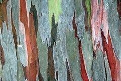 Kleuren houten textuur Stock Foto