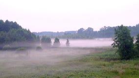 Kleuren roze mist die langzaam langs de grond in een bos wordt uitgespreid stock video