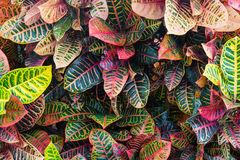Kleuren van aard Royalty-vrije Stock Afbeeldingen