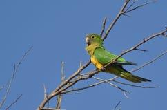 Kleuren van Brazilië en Tropische gebieden Royalty-vrije Stock Foto's