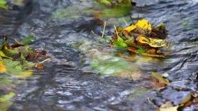 Kleuren van de herfst stock videobeelden