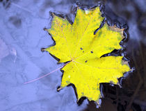 Kleuren van de herfst. Stock Afbeeldingen