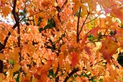 Kleuren van de herfst stock foto