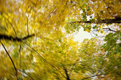 Kleuren van de herfst stock afbeeldingen