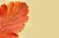 Kleuren van de herfst #5 stock foto's
