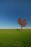 Kleuren van de Herfst Stock Afbeelding