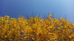 Kleuren van de herfst Royalty-vrije Stock Afbeeldingen