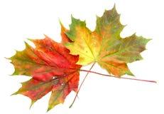 Kleuren van de herfst #9 Royalty-vrije Stock Foto's