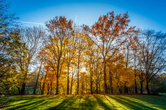 Kleuren van de Herfst/Daling Stock Foto's