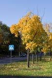Kleuren van de herfst en verkeersteken stock afbeeldingen