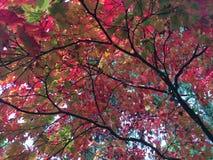 Kleuren van de Herfst/Fall2 Stock Foto