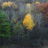 Kleuren van de herfstbos Stock Afbeelding