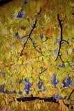 Kleuren van de herfstseizoen in Mazovia-gebied in Polen Royalty-vrije Stock Foto