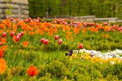 Kleuren van de lente Royalty-vrije Stock Afbeeldingen