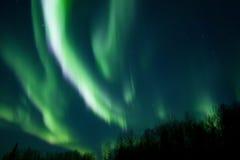 Kleuren van de noordelijke lichten over bomen Royalty-vrije Stock Foto's