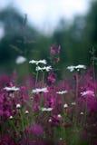 Kleuren van de zomer Royalty-vrije Stock Foto's