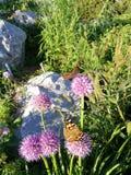 Kleuren van de zomer en de vlinder royalty-vrije stock foto