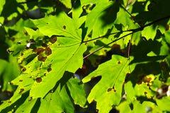 Kleuren van het begin van de Herfst Stock Afbeeldingen