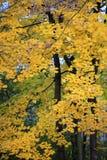 Kleuren van het de herfstseizoen in Mazovia-gebied in Polen Stock Afbeeldingen