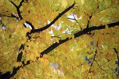 Kleuren van het de herfstseizoen in Mazovia-gebied in Polen Royalty-vrije Stock Afbeeldingen
