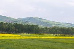 Kleuren van het land Stock Foto's