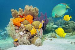 Kleuren van het mariene leven onderwater Royalty-vrije Stock Afbeelding