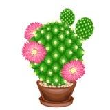 Kleurenbeeld Ingemaakte installatie in een pot De groene cactus is sferisch met knobbeltjes die met stekels worden behandeld Mamm royalty-vrije illustratie