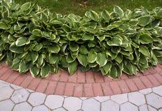 Kleurenbestrating en groene bloembladeren Royalty-vrije Stock Afbeelding