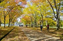 Kleurenbladeren in de Herfst Stock Fotografie