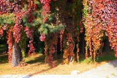 Kleurenbladeren in de herfstpark Stock Afbeeldingen