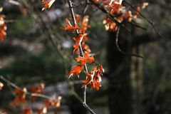 Kleurenbladeren op een de winterachtergrond Royalty-vrije Stock Afbeeldingen