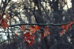 Kleurenbladeren op een de winterachtergrond Royalty-vrije Stock Afbeelding