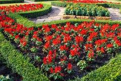 Kleurenbloemen in mooie tuin Stock Foto