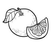 Kleurend boek, Grapefruit stock illustratie