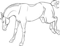 Kleurend boek met een paard Stock Afbeelding