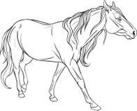 Kleurende pagina met paard Stock Foto