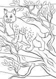 Kleurende pagina's dieren Weinig leuke lynx Stock Afbeelding