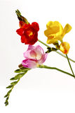Kleurenflawers Stock Afbeelding