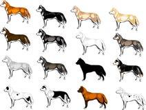 Kleurenopties Huskies stock illustratie